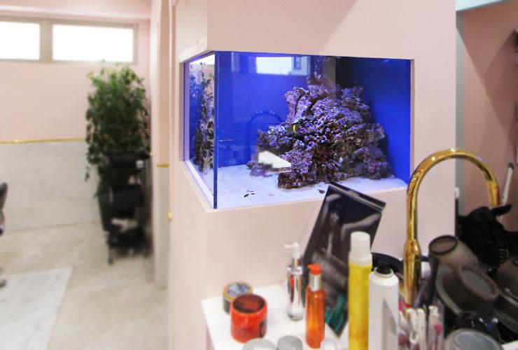 神奈川県横浜市 美容室 60cm海水魚水槽 水槽変更事例 水槽画像3