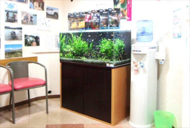 横浜 歯科医院の待合室 90cm淡水魚水槽 設置・メンテナンス事例