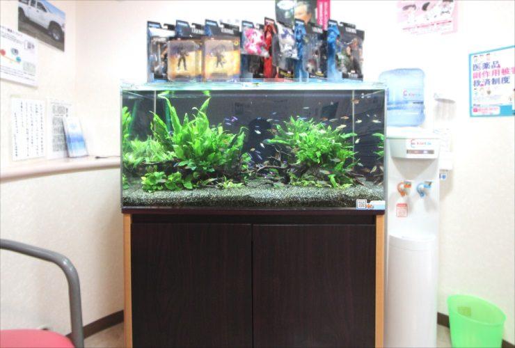 横浜 歯科医院の待合室 90cm淡水魚水槽 設置・メンテナンス事例 水槽画像2