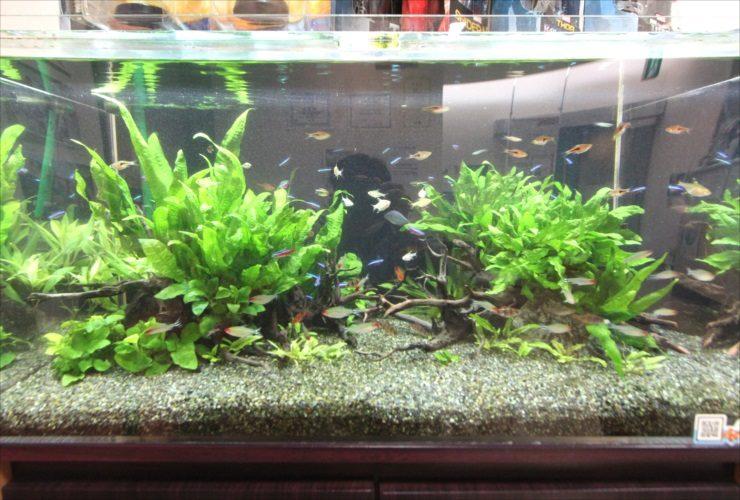 横浜 歯科医院の待合室 90cm淡水魚水槽 設置・メンテナンス事例 水槽画像3