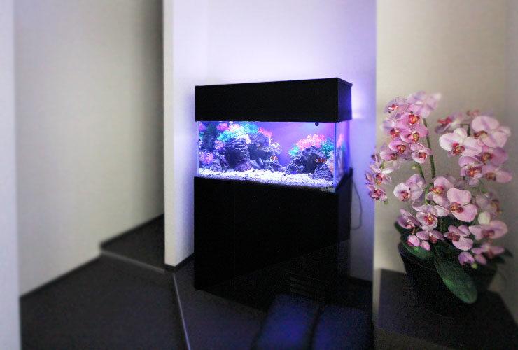 神奈川県横浜市 歯科クリニック  90cm海水魚水槽 設置・メンテナンス事例 水槽画像1