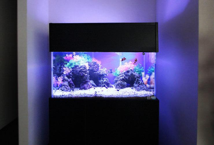 神奈川県横浜市 歯科クリニック  90cm海水魚水槽 設置・メンテナンス事例 水槽画像2