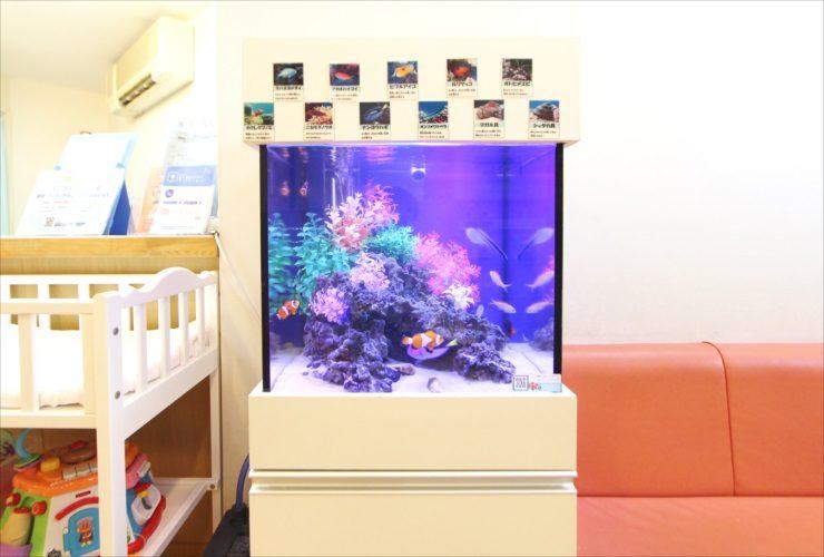 神奈川県横浜市 小児科の待合室 45cmキューブ水槽設置 その後