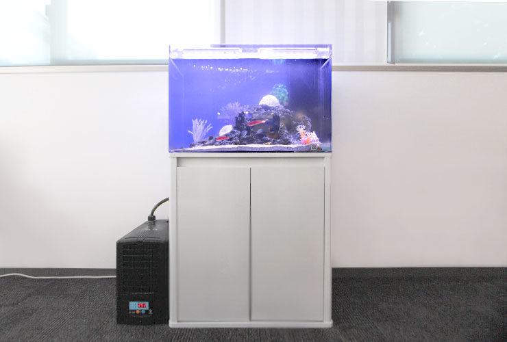 東京都新宿区 オフィス 60cm海水魚水槽設置 その後 メイン画像