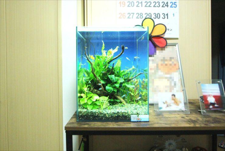 千葉県 個人宅のリビング 30cm淡水魚水槽 設置事例
