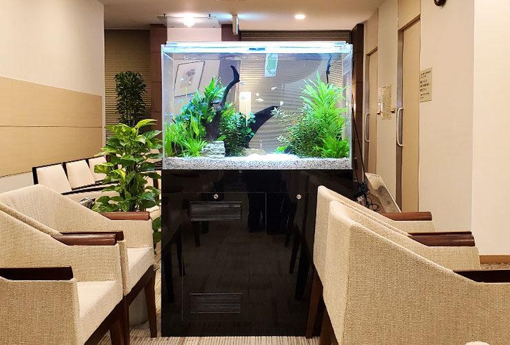 東京都新宿区 検診センター 90cm淡水魚水槽 設置事例 その後 水槽画像2