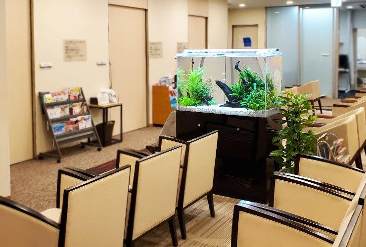 東京都新宿区 検診センター 90cm淡水魚水槽 設置事例 その後 水槽画像3