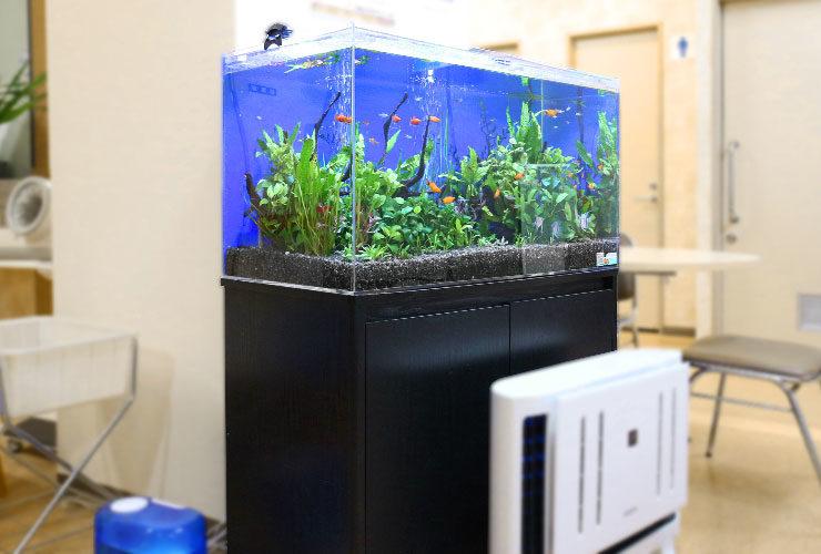 あきる野市 内科クリニック 90cm淡水魚水槽 設置事例 水槽画像3