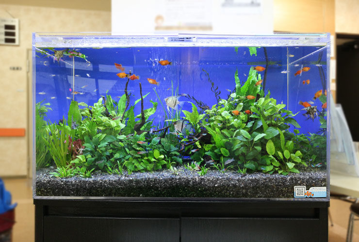 水槽レンタルサービス 淡水魚水槽