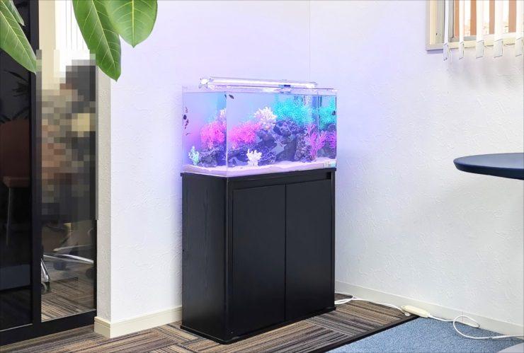 オフィスの打ち合わせスペース 幻想的な60cm海水魚水槽 設置事例 メイン画像