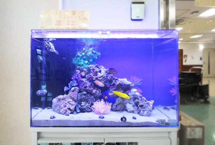 練馬区 介護付有料老人ホーム 60cm海水魚水槽 その後 水槽画像1