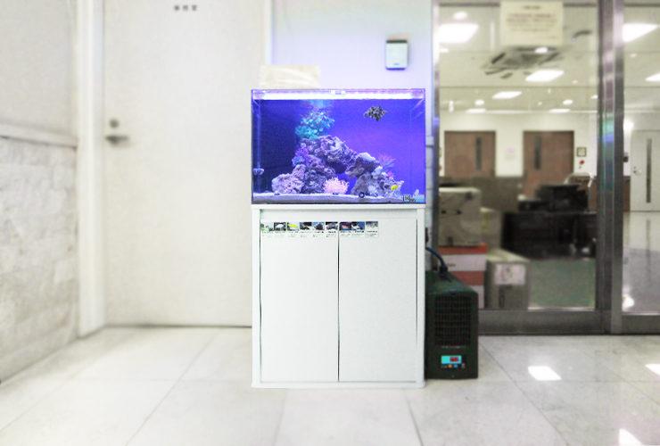 練馬区 介護付有料老人ホーム 60cm海水魚水槽 その後 水槽画像2