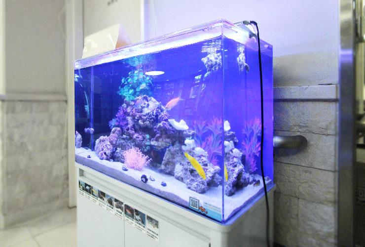 練馬区 介護付有料老人ホーム 60cm海水魚水槽 その後 水槽画像3