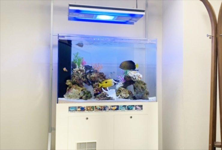 豊島区 オフィス事務所 90cm海水魚水槽 入替事例 水槽画像2