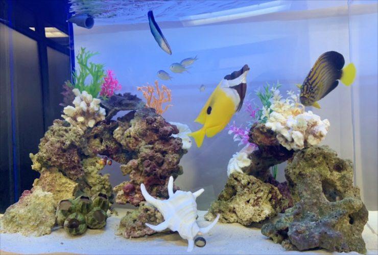 豊島区 オフィス事務所 90cm海水魚水槽 入替事例 水槽画像3