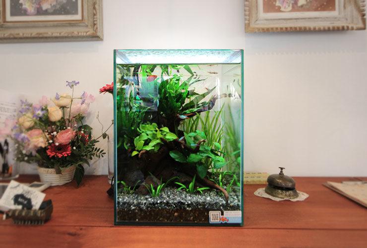 府中市 カフェ 無料お試しキャンペーン 30cm淡水魚水槽 レンタル事例 水槽画像3