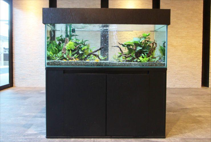 練馬区 新築マンションのエントランス 120cm淡水魚水槽 短期設置事例 水槽画像2