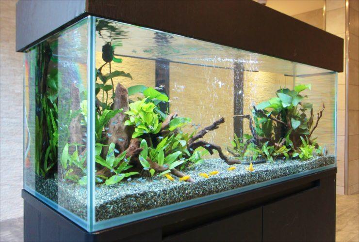 練馬区 新築マンションのエントランス 120cm淡水魚水槽 短期設置事例 水槽画像3