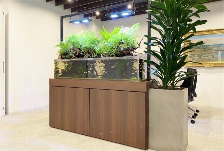 日本橋 オフィスのエントランス 150cmアクアテラリウム水槽 販売事例その後 水槽画像2