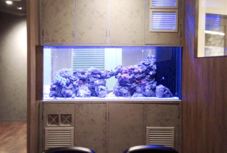 渋谷区 オフィスのエントランス 大型海水魚・サンゴ水槽 その後 水槽画像2