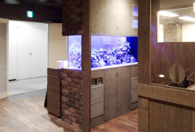 渋谷区 オフィスのエントランス 大型海水魚・サンゴ水槽 その後 水槽画像3