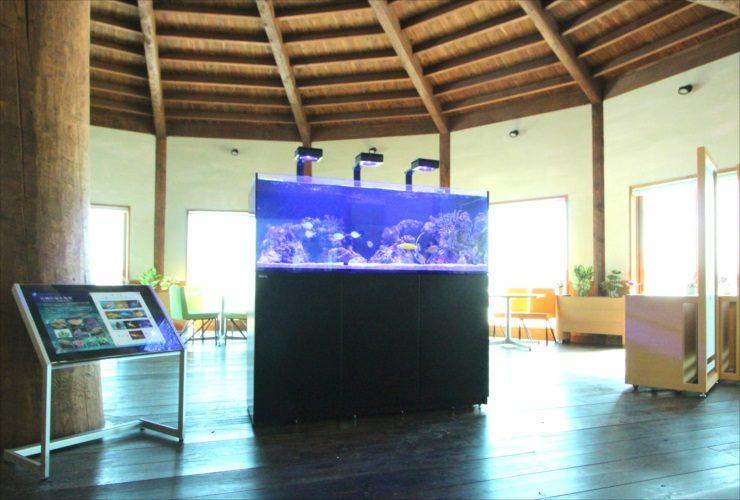 北海道苫小牧市 企業施設 150cm海水魚・サンゴ水槽入替事例 水槽画像2