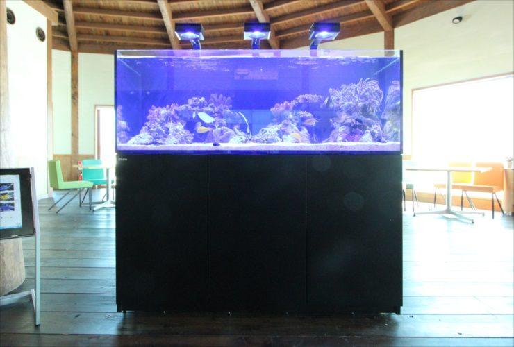 北海道苫小牧市 企業施設 150cm海水魚・サンゴ水槽入替事例 水槽画像3