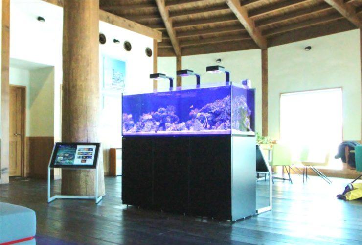 北海道苫小牧市 企業施設 150cm海水魚・サンゴ水槽入替事例
