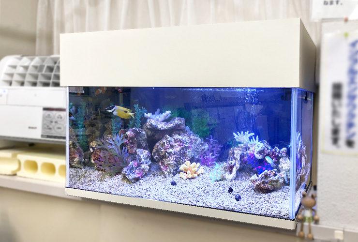 神奈川県大和市 内科クリニック 90cm海水魚水槽 リニューアル事例 水槽画像1