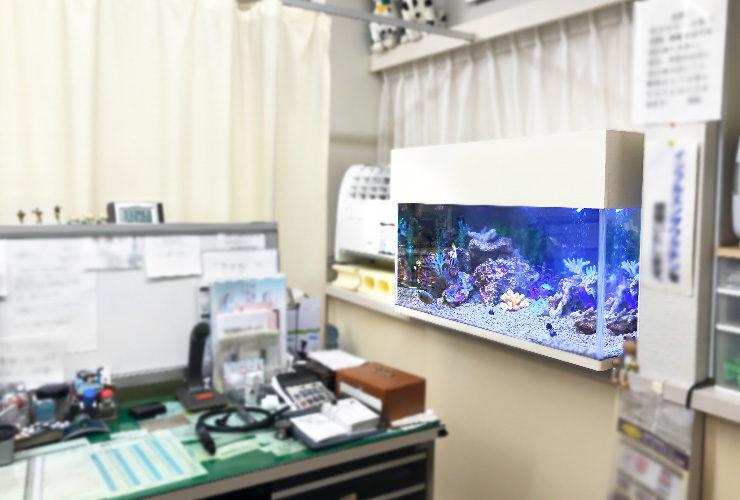 神奈川県大和市 内科クリニック 90cm海水魚水槽 リニューアル事例 水槽画像2
