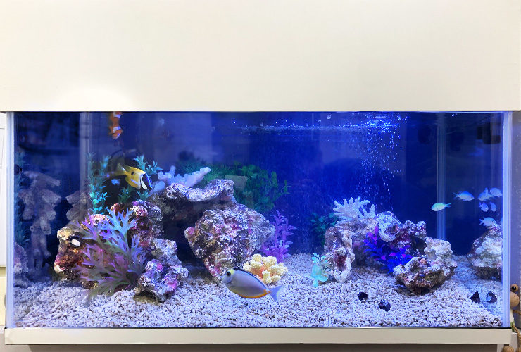 神奈川県大和市 内科クリニック 90cm海水魚水槽 リニューアル事例 水槽画像3