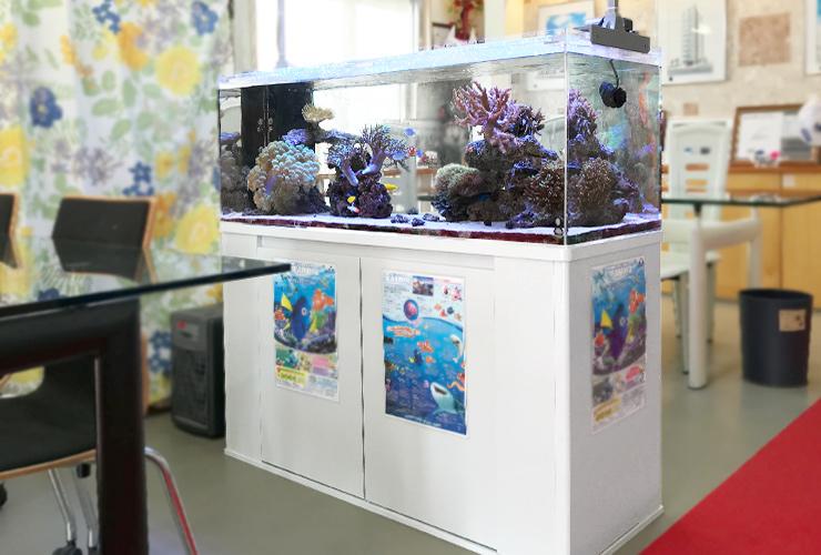 大阪市 不動産事務所 120cm海水魚サンゴ水槽 設置事例 メイン画像