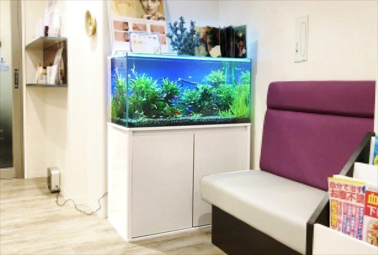 グリーンズクリニック様 待合室 90cm淡水魚水槽 設置事例