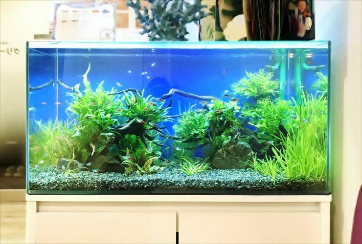 グリーンズクリニック様 待合室 90cm淡水魚水槽 設置事例 水槽画像2