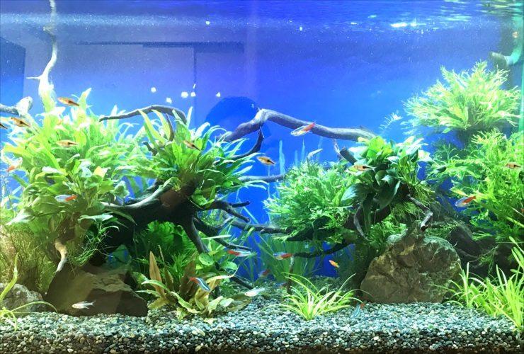グリーンズクリニック様淡水魚水槽3