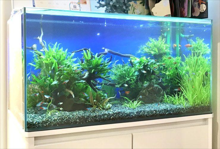 グリーンズクリニック様淡水魚水槽4