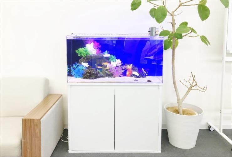 大阪市 オフィス事務所 90cm海水魚水槽 設置・メンテナンス事例 メイン画像