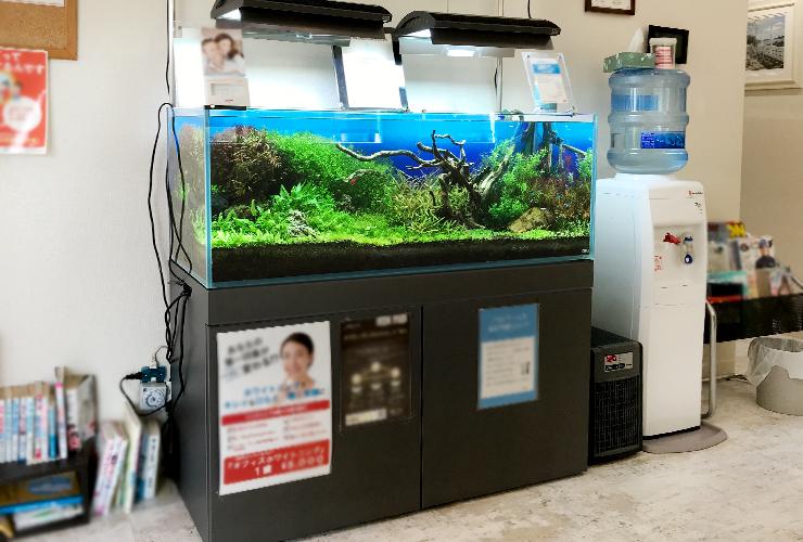 神戸市 歯科クリニック 120cm淡水魚水槽 メンテナンス事例 メイン画像
