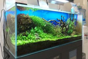神戸市 歯科クリニック 120cm淡水魚水槽 メンテナンス事例 水槽画像3
