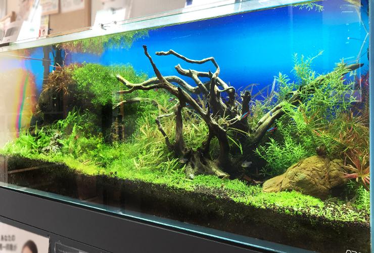120cm淡水魚水槽 メンテナンス画像3