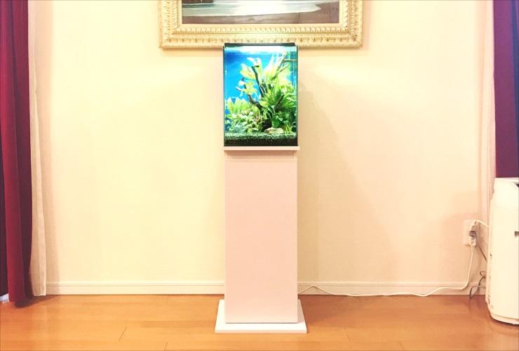 兵庫県尼崎市 個人宅のリビング 30cm水草水槽 販売・設置事例 メイン画像