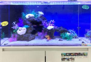 大阪府茨木市 薬局 90cm 海水魚水槽 設置事例 水槽画像2