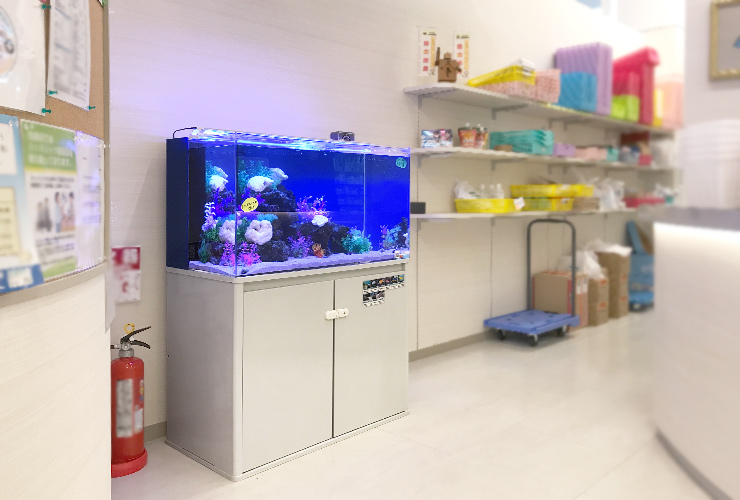 大阪府茨木市 薬局 90cm 海水魚水槽 設置事例 メイン画像