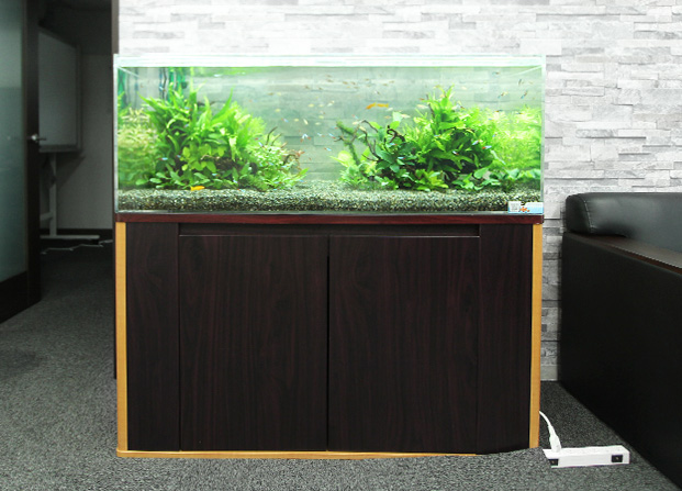 東京アクアガーデン レンタル水槽 120cm淡水魚アクアリウム水槽