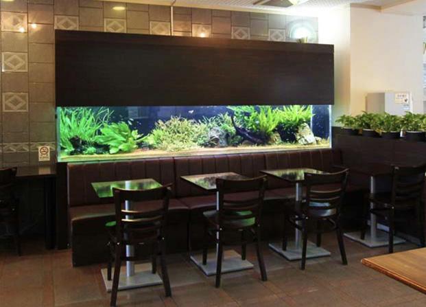 東京アクアガーデン レンタル水槽 150cm淡水魚アクアリウム水槽