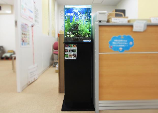 東京アクアガーデン レンタル水槽 30cm淡水魚アクアリウム水槽