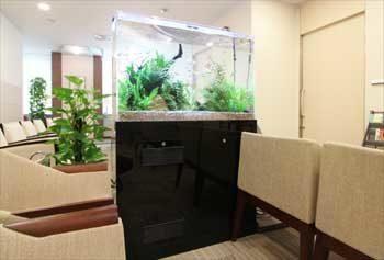 新宿区 検診センターの待合室 90cm淡水魚水槽 設置事例 その後 水槽画像1