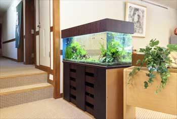 神奈川県 湯河原町 老人ホーム 120cm淡水魚水槽 設置事例 水槽画像1
