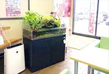 ガソリンスタンド 店舗に設置 90cmアクアテラリウム水槽レンタル事例 その後 水槽画像1