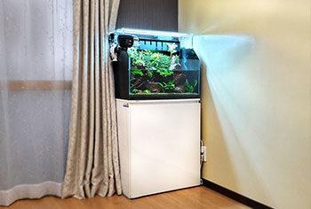 新宿区 企業 60cmアクアテラリウム水槽 メンテナンス事例 水槽画像1